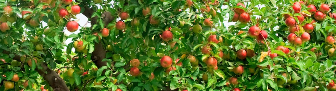Fruiting Trees Plants Plant a Fruit Tree Spring