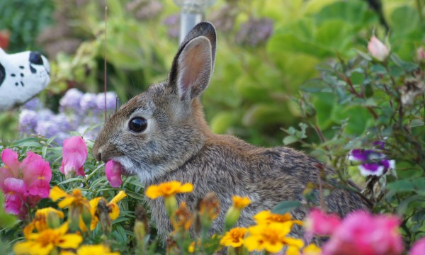 Keep Groundhogs And Bunnies Away From Your Garden Smart Tips