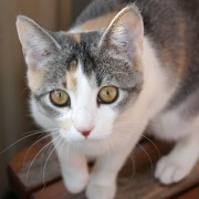 How to know if your cat has a food allergy