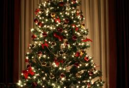 Advice on keeping your Christmas tree fresh