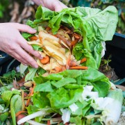 Tips on composting for beginners