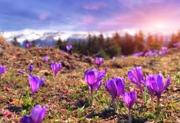 5 tips for planting flower bulbs