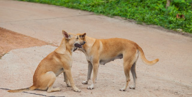 2 homemade solutions for your dog's fleas