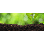 Fruitful earth: how to improve your garden soil