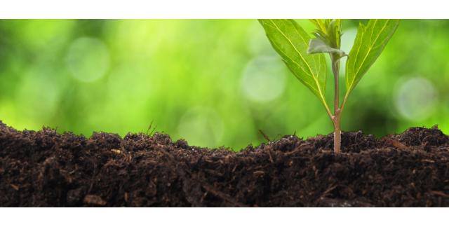 Fruitful earth: how to improve your garden soil