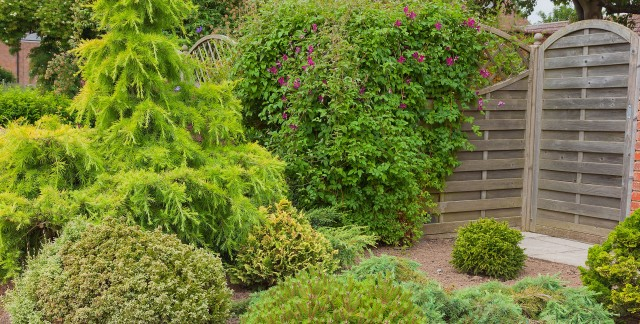 Reasons evergreens are great for mild winters