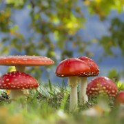 First aid for your lawn: fairy ring