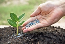 Fertilizer 101: everything you need to know
