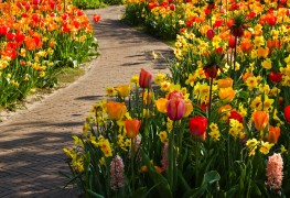 5 tips for planting flower bulbs
