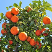 Tips for growing fruit trees