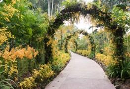 Tough plants to adorn your path
