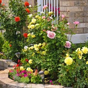 Keep your garden blooming with these plumbing tips