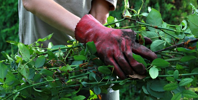 Easy ways to organize garden tools