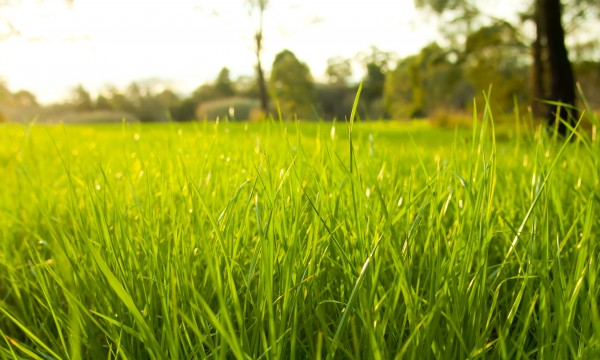 Tips for growing a beautiful green lawn