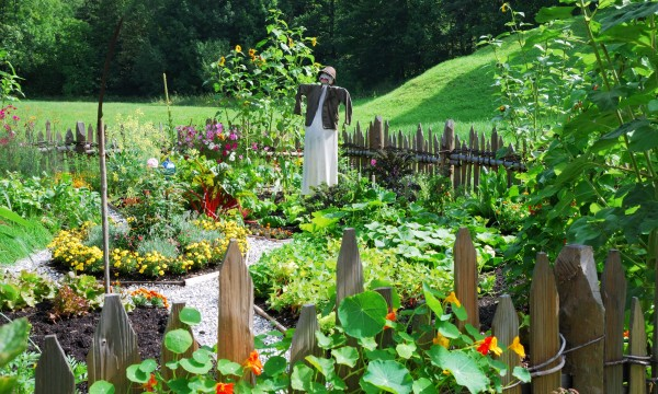 10 key pointers for starting a vegetable garden
