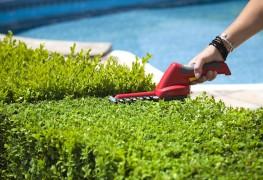 2 ways to grow beautiful hedges