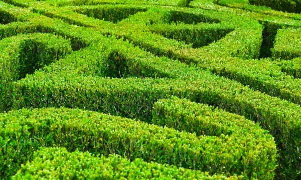 Delicieux How To Take Care Of Your Garden Hedges