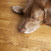 What's the best home flooring for pets?