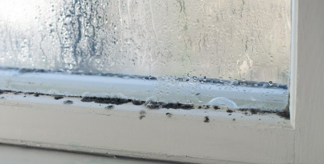 The leading causes of mould and how to prevent it