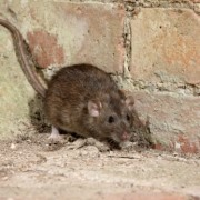 5 different pest control products to protect your home
