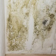 3 steps to get rid of mould before painting
