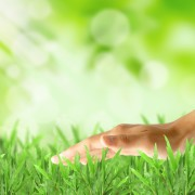 Breathe new life into your lawn