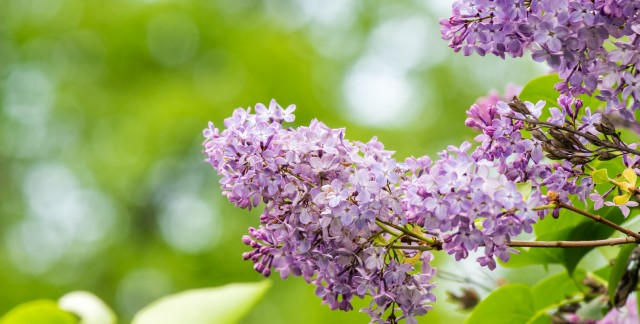 4 ways to care for the trees in your yard