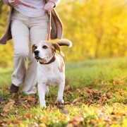 Easy remedies and at-home treatments for insect bites on your dog