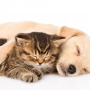 Natural pet treatments to control fleas and ticks