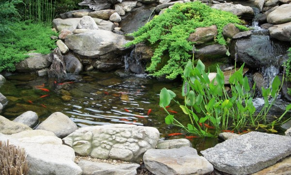 Simple steps for cleaning a fish pond smart tips for Koi pond plant ideas