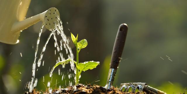 Reusing household items for gardening