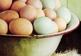 How to prepare farm-fresh eggs for Easter