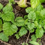 Amazing DIY indoor herb gardens