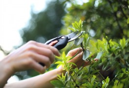 Save money gardening this summer