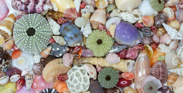 3 easy steps to cleaning seashells