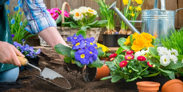 Secrets to a perfect garden all year round