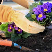 Secrets to gardening on the cheap