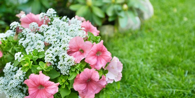 18 secrets to planning a low-maintenance garden