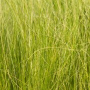 First aid for your lawn: shaded grass