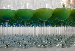 4 great themed drinks for St. Patrick's Day