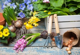 Time-saving gardening secrets
