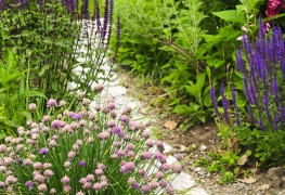 7 tips for making a garden path