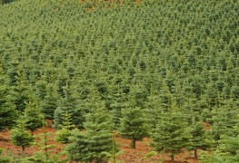Helpful advice on starting a tree farm