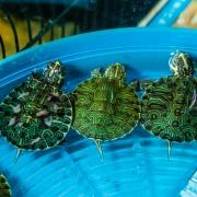 Homemade food for turtles, reptiles and aquarium fish
