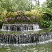 Tips for keeping a fountain or other water feature clean