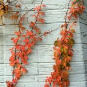 10 conseils pour cultiver des plantes grimpantes dans votre jardin