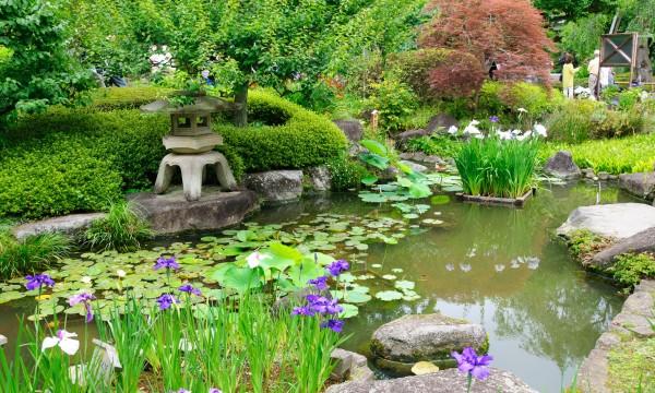 Un Bassin D 39 Eau Dans Votre Jardin En 8 Tapes Trucs