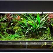 8 étapes pour créer un terrarium