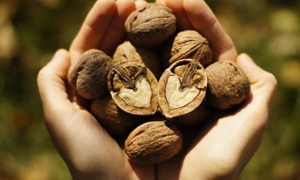 Un guide du débutantpour la culture d'arbre à noix