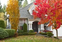 5 conseils pour bien choisir ses arbres avant de planter